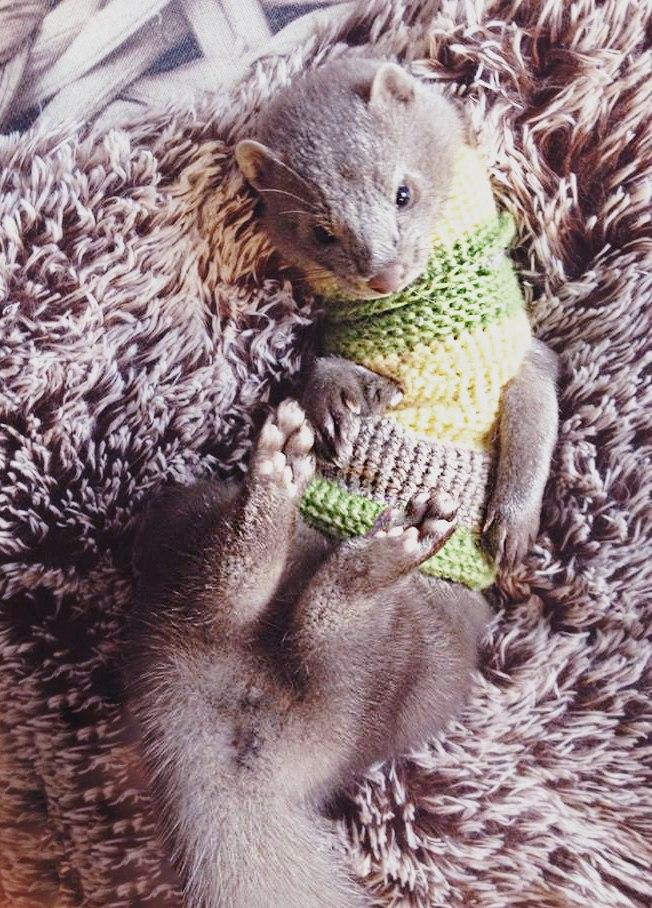 Хантер в свитере