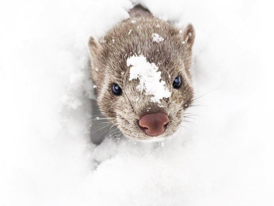 Хантер купается в снегу
