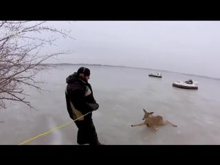 Мужики спасли оленей на озере