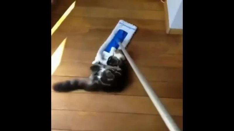 Cats Deja vu