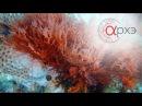 Андрей Журавлев: Как бактерии создали атмосферу и всё прочее [4000-550 млн лет назад]