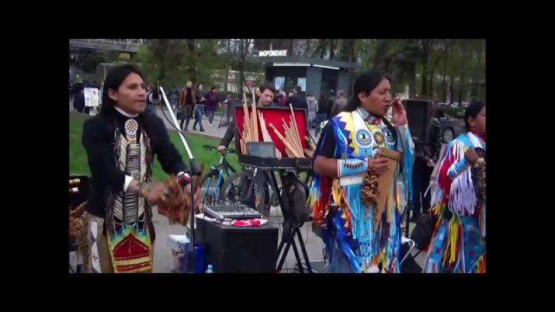 Есudor Spirit Wuambrakuna Кury Muchachos de pelo largo Москва MAH0066 06 05 2017