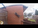 9 Lives Parkour Cat