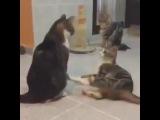 Drum&Cats