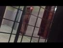 Навальный в клетке