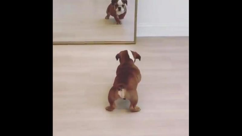 Когда увидела себя в зеркало. х)