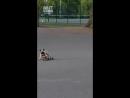 Собакен гуляет в парке