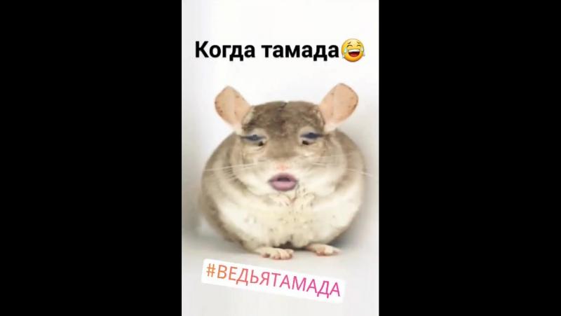 тамада Miagy Эдшпиль
