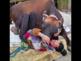 This woman rescued a cow from a fire, and now they have become great friends!