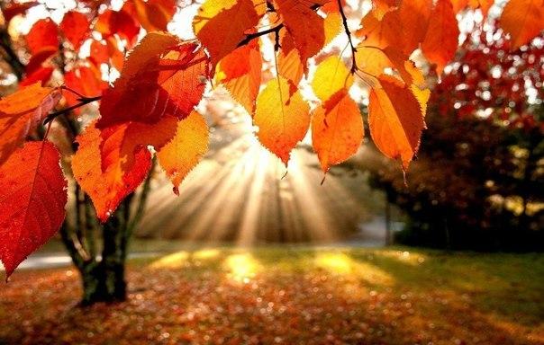 Наступила осень... Пускай все мечты сбудутся...