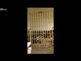 Трое заключенных сбежали из тюрьмы в Калифорнии и сняли видео. (VHS Video)