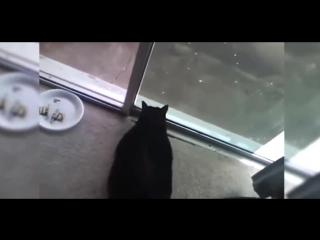 Кот пукнул