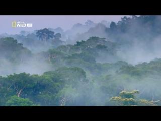 Дикая природа Амазонки.