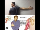 This is a great stretch for shoulder pain and discomfort but first, here's an understanding of the shoulder. - (Let's talk about