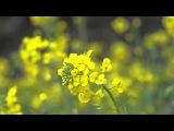 Тестирование объектива Nikon AF-S Nikkor 50 mm f 1.4G на фотоаппарате Nikon D7000