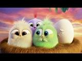 Едвард р (Грг) - Пташка Эдвард Григ - Птичка Angry Birds