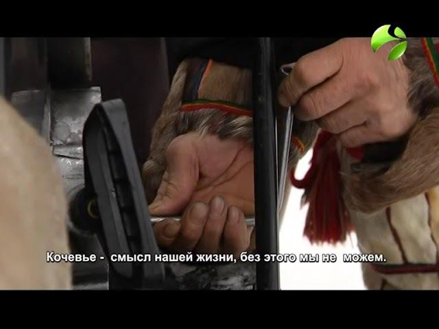 Душа тундры. Фильм победитель Всероссийского конкурса Взгляд на страну