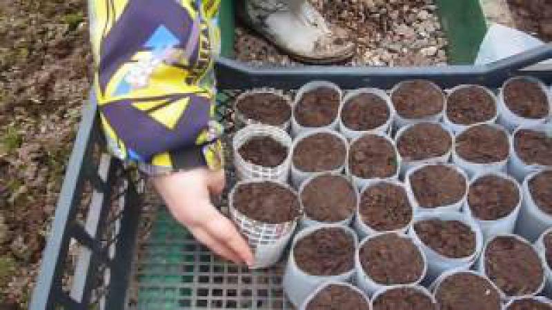 Изготовление стаканчиков для рассады капусты....своими руками.
