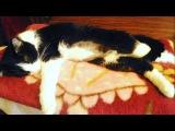 Смешные Кошки И Котики От Семена Алисы #02