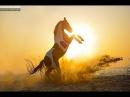 ~ Конный спорт ~ Alan walker Faded ~ Equestrian sport ~