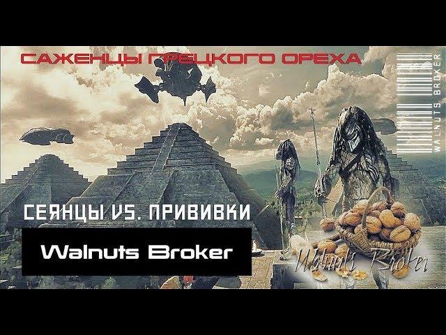 Что лучше - сеянец или привитый грецкий орех?! Walnuts Broker