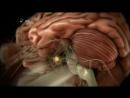 Neden aci biberi severek yeriz? Beslenme seklimizin beyin iliskisi.