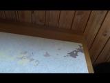 Картина по номерам ОБЗОР и СОВЕТЫ рисуем красками