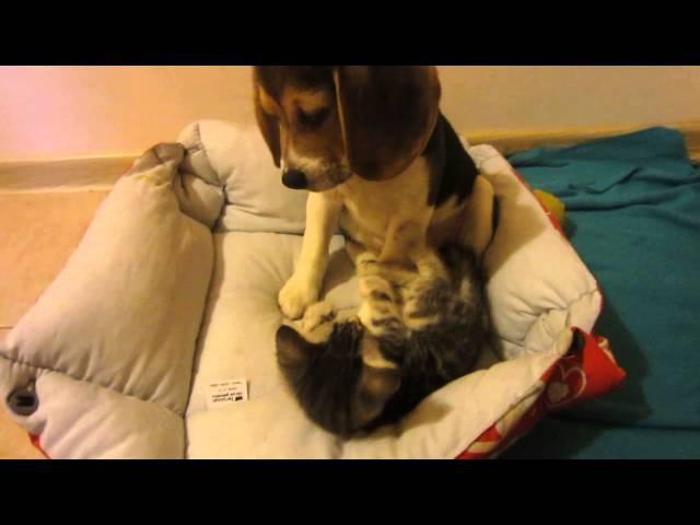 Щенок и котенок (Любимый батончик Рей и клубочек Семочка)