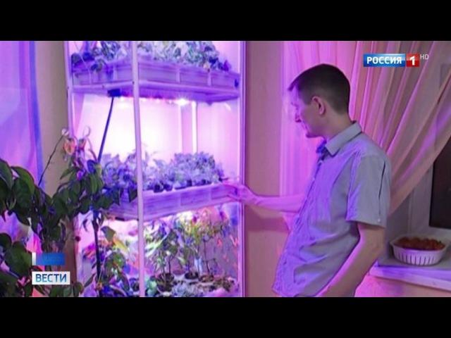 Вести.Ru: Сити-фермерство: почему выращивать салат и помидоры у себя на кухне стало модно