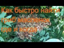 Поход в лес за грибами маслятами 15 июля 2017 Сибирь тайга тихая охота природа сбор