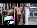 Медведь живет в клетке на автомойке в МО