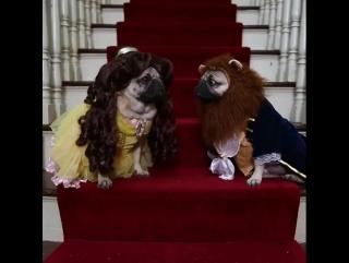 Красавица и Мопс (VHS Video)