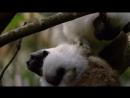 Очень классный фильм - Мифы Амазонки. Документальные фильмы