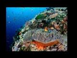 Затерянный мир - Андаманские острова