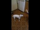 моя собака умняшка