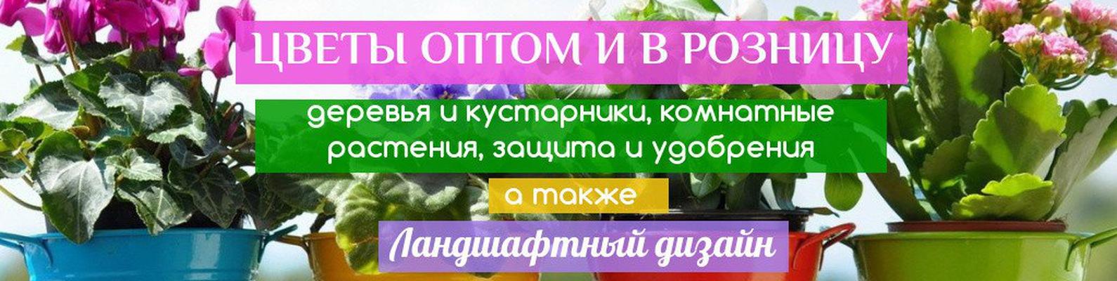 28a9dbde4 Растения и цветы в Одессе. Садовый центр-Земля_Х | ВКонтакте