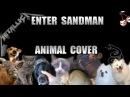 Metallica - Enter Sandman Animal Cover
