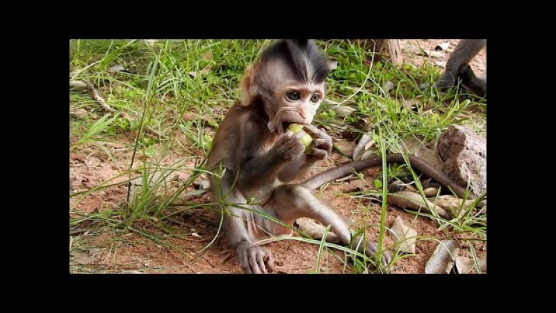Cute newborn baby monkey - Little baby monkey very lovely - Tube BBC