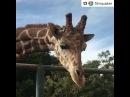 Финн с жирафиком