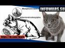 Как ЦРУ пыталось превратить кошку в шпиона, имплантировав в неё микрофон