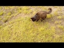 охота на мышь 1