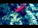 Просто фрагмент, просто Красное море, просто под водой...