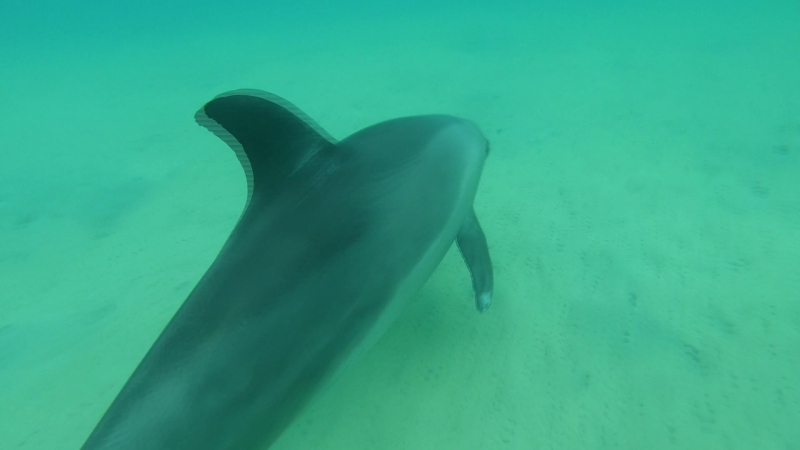 Катя в погоне за дельфином на пляже в Египте