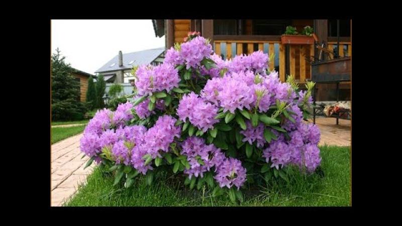 6 кустарников, которые преобразят ваш сад за самое короткое время