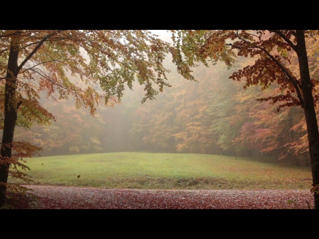 Relaxing Autumn Forest / Leaves Falling From Trees, Fog and Rain in Colorful Forest / 8 Hour