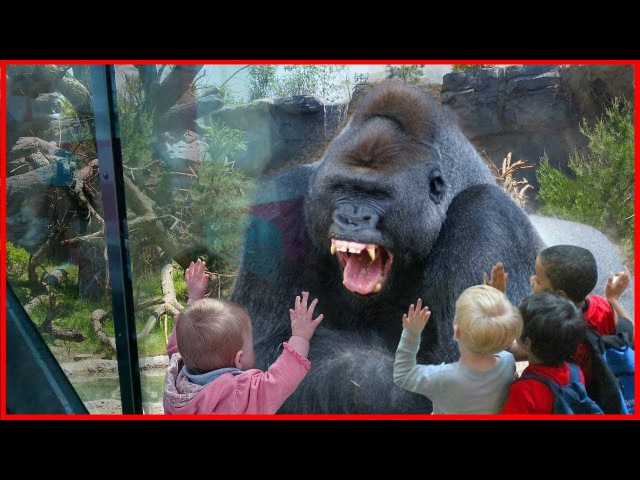 🔴The Strongest ZOO Scenes!! Animals Do Not Know What is Glass