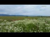 Звуки Природы - Сверчки и Звук Ветра, Шелест Травы - 3 часа Релакса