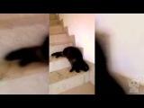 Кот. Жидкий. Жидкий кот. Лестница. Жидкий кот на лестнице. (Котики №20)