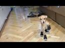 Смешные животные Funny Dogs Cats Compilation 2017 Смешные собаки и умные кошки Приколы про со ...