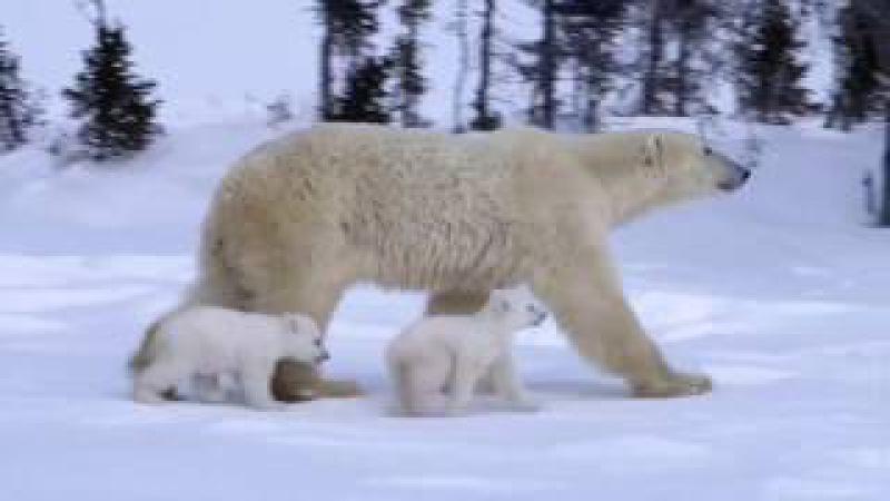 Что мы узнаем из книги Иов. Животный мир | JW.ORG